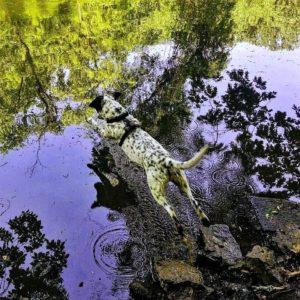 Diving-Cash-Dog-TWEAKED-300x300.jpg