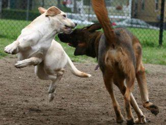 Dog-Park-Dangers-1024x1024.jpg