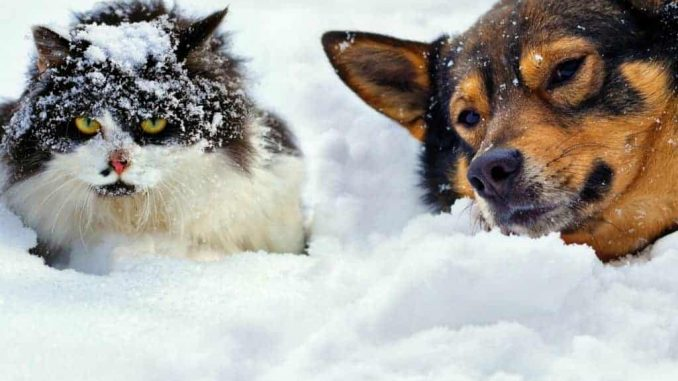 Dog-and-cat-winter-scene.RETOUCHED-1024x741.jpg