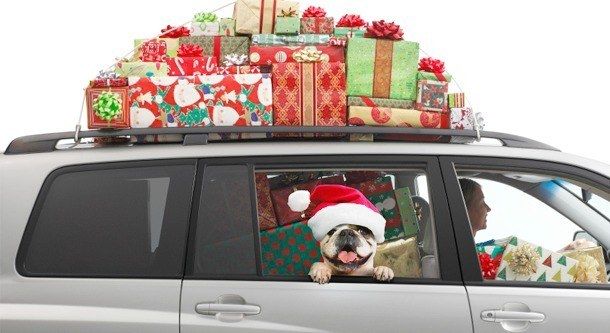 Dog-traveling-with-presents.RETOUCHED.jpg