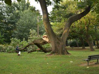 EastFallsLocal-9-13-mcmichael-tree-down-survey-steve-1024x683.jpg