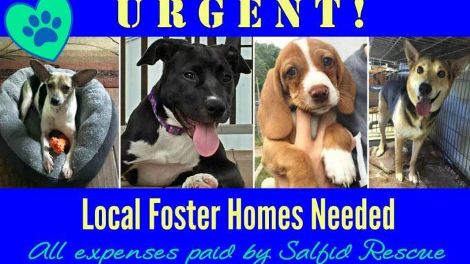 EastFallsLocal-fosters-needed-collage-txt-1024x620.jpg