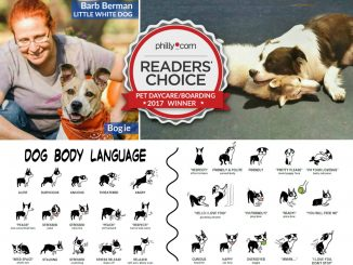 EastFallsLocal-readers-choice-collage-barb-dog-body-language-WINNER.jpg