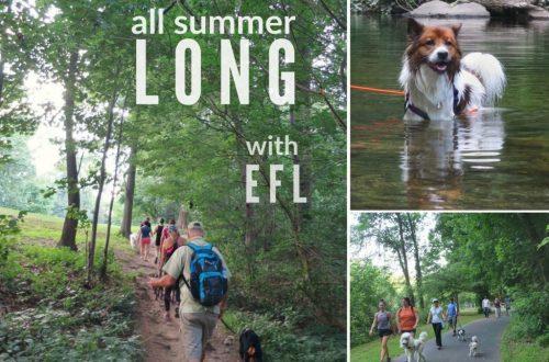 EastFallsLocal-wissahickon-collage-txt-all-summer-long-1024x791-1-1024x791.jpg