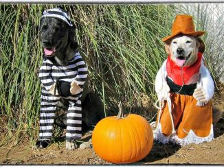 EastFallsLocal.Dogs-in-Costume.FIXED_-1024x731.jpg