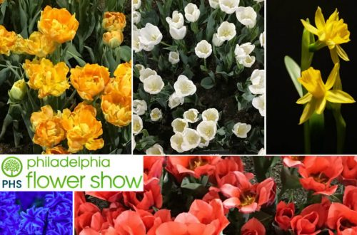 EastfallsLocal-Phila-Flower-Show-collage-1024x789.jpg