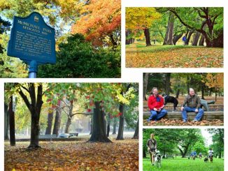 Eastfallslocal-McMichael-Park-collage2-1024x776.jpg