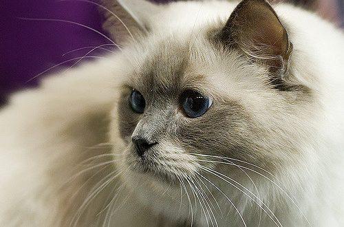 Kitty-Pic.jpg