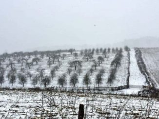 Snowy-Field.RETOUCHED-1024x576-1024x576.jpg