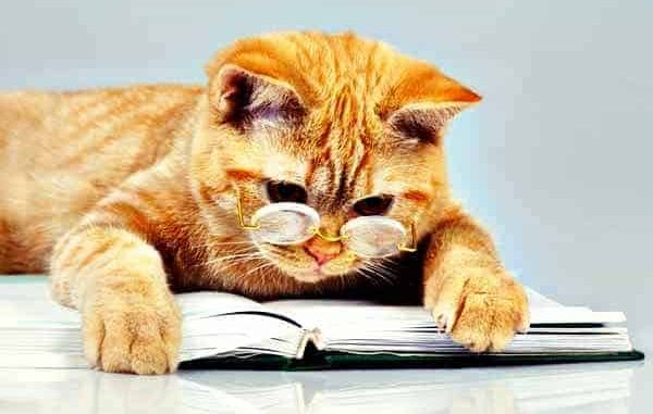 cat-reads-book.RETOUCHED.jpg